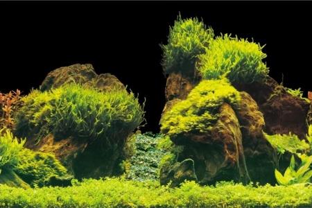 ROCK/PLANTS S